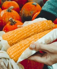 Photo de deux mains présentant de deux brins de maïs avec un fond coloré par les légumes orange