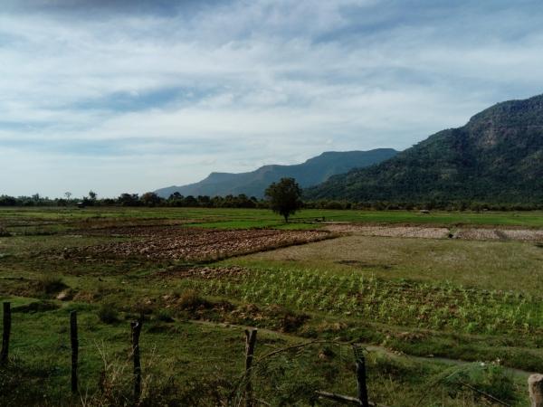 De l'agroécologie et la transversalité des agricultures