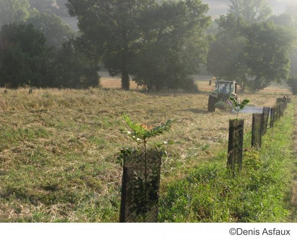 L'agroforesterie, aux racines de la fertilité