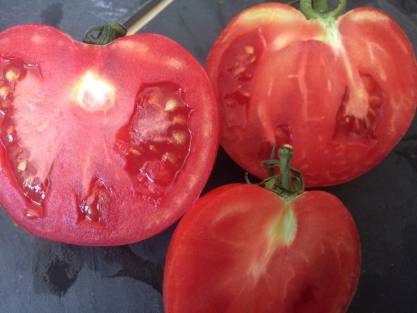 Des tomates avec du goût, s'il vous plaît !