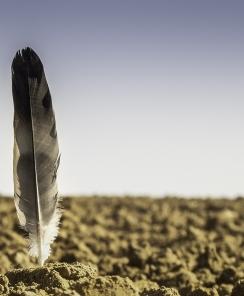 Photographie d'une plume plantée verticalement dans un champs labouré. (vue à ras du sol)