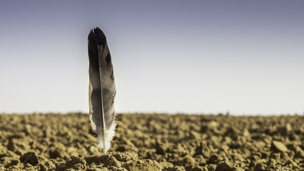 Pourquoi les oiseaux disparaissent-ils des campagnes ?