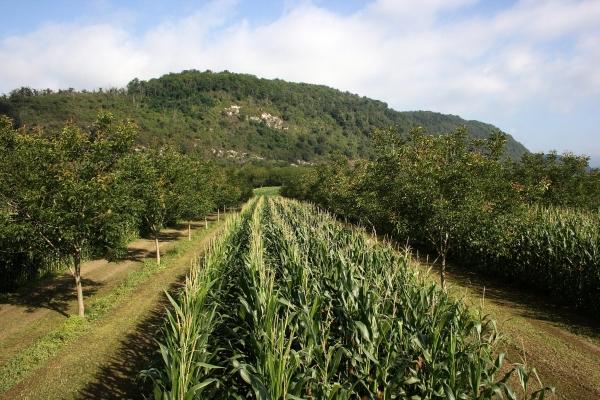 Comment l'agriculture peut ralentir le réchauffement climatique