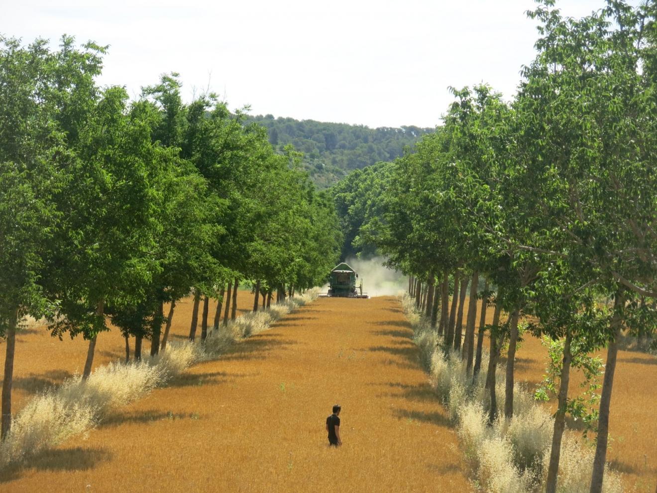 L'arbre au service de l'agriculture