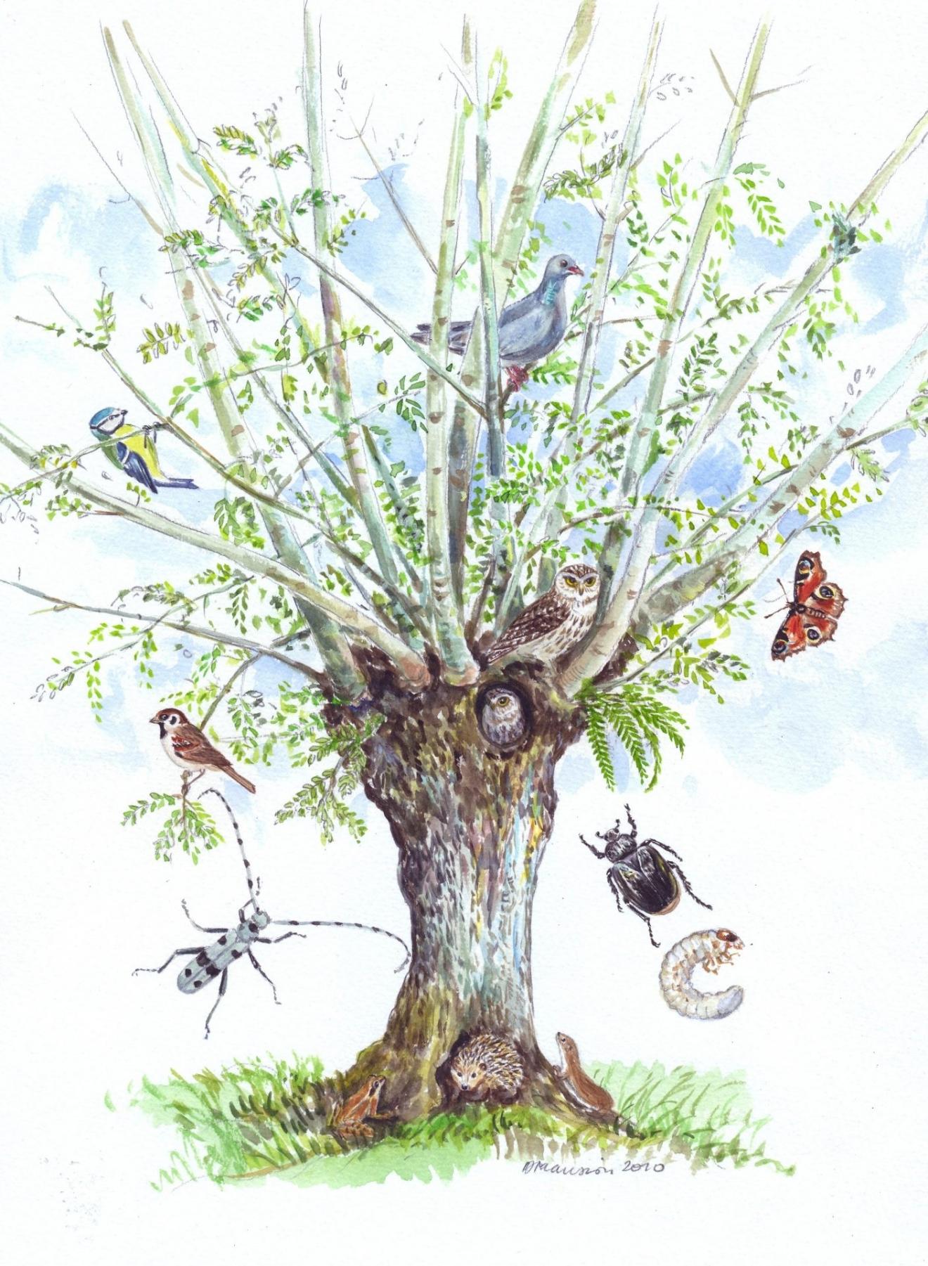 Dominique Mansion : « Les trognes, arbres paysans aux mille usages »